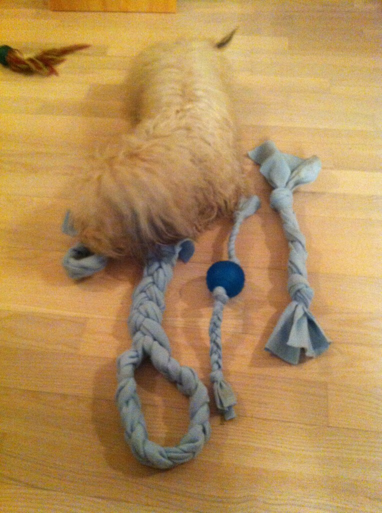 No Sew Dog Toy