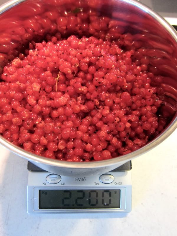 How to Make Your Own Red Currant Juice Concentrate - 1 of 5